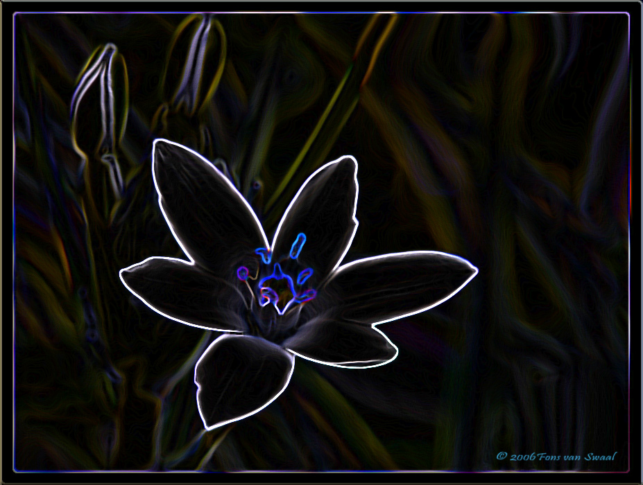 Just a flower Manipulated